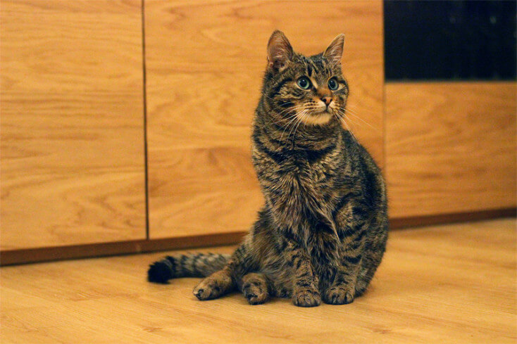 Iggy, kot adopcja Poznań