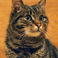 Iggy kot do adopcji Poznań