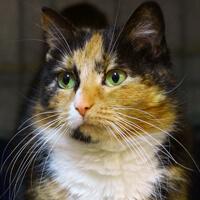 Inez, kotka do adopcji Poznań