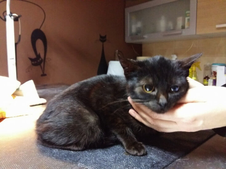 Kendi, czarna kotka do adopcji Poznań