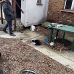 Kotki z Kaliowej