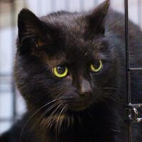 Mysia, starsza kotka do adopcji Poznań