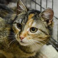 Anielka, kotka do adopcji