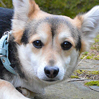 Asik, mały pies do adopcji Poznań, Dopiewo