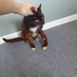 Kot do którego strzelano - Rabarbar