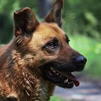 Mundi, pies do adopcji Poznań