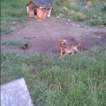 W Dzień Psa prosimy o pomoc dla psów ze Swarzędza