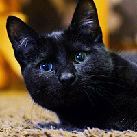 Bolek, kot do adopcji, Poznań