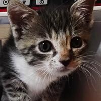 Malaga, kotka do adopcji, Poznań