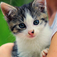 Tola, kotka do adopcji, Poznań