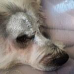 24-07-2016 - chory czlowiek prosi o pomoc dla chorego psa 2