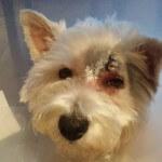 24-07-2016 - chory czlowiek prosi o pomoc dla chorego psa 3