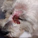 24-07-2016 - chory czlowiek prosi o pomoc dla chorego psa 4