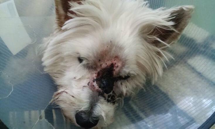 24-07-2016 - chory czlowiek prosi o pomoc dla chorego psa 5
