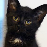 Kiwi, kotka do adopcji