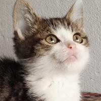 Raphael, kot do adopcji, Poznań