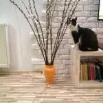 zaginela kotka lazarz (2)