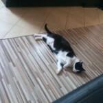 zaginela kotka lazarz (5)