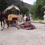 02-09-2016 - kilka slow o powozach konnych (2)