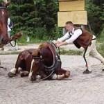 02-09-2016 - kilka slow o powozach konnych (3)