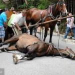 02-09-2016 - kilka slow o powozach konnych (5)