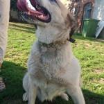 06-09-2016 - interwencja pies elza (2)