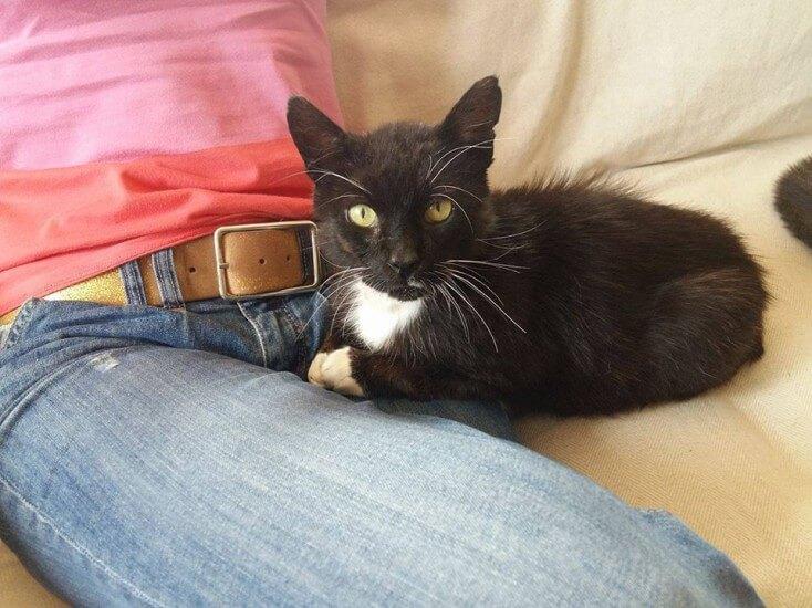 16-08-2016 - rabarbar znowu czarnym kotem (3)
