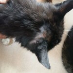 16-08-2016 - rabarbar znowu czarnym kotem (4)