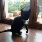 16-08-2016 - rabarbar znowu czarnym kotem (5)