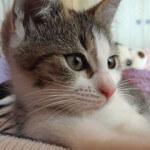2 miesięczna Tosia szuka domu