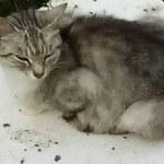 Pomóżcie znaleźć dom dla samotnej, łagodnej kotki mieszkającej na polu.