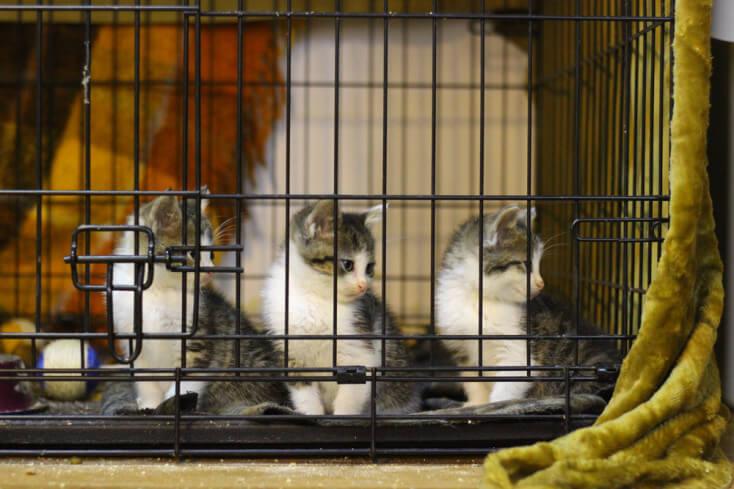Bardzo potrzebujemy domów tymczasowych i stałych dla kotów!