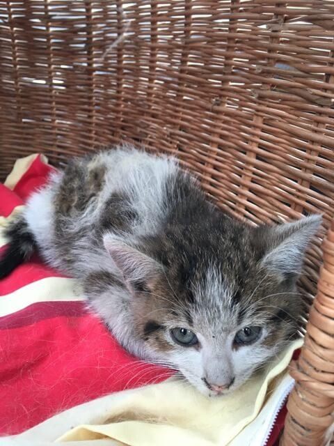 Przedstawiamy kotka Fuksa