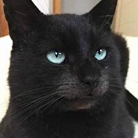 Czaruś, czarny kot do adopcji, Poznań