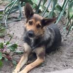 Grzecznościowo: Dianka szuka domu