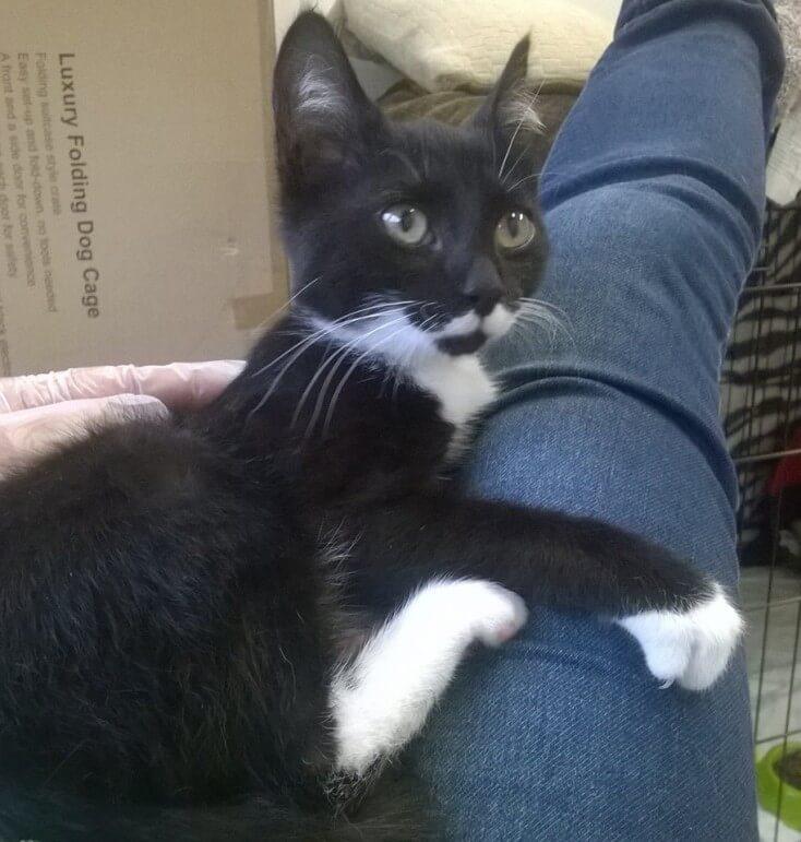 Fido, nowy koci maluch do adopcji