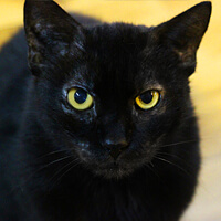 Nana, czarna kotka do adopcji, Poznań