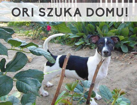 Mały Ori - łakomczuszek szuka kochającego domu!
