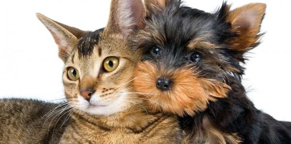 Podpisz petycję w sprawie poprawy warunków w Schronisku dla Zwierząt w Pile