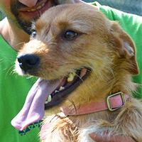 Roni, pies do adopcji, Poznań
