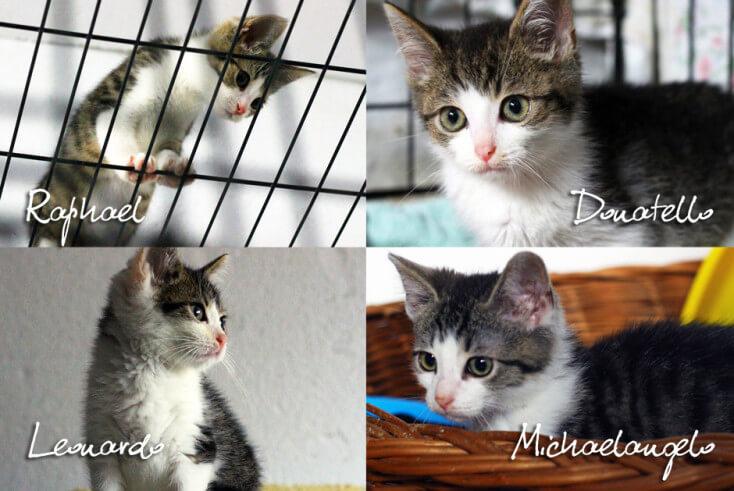 ardzo pilnie szukamy domu tymczasowego/stałego dla czterech kociaków