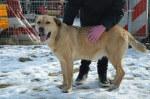 Ball, idealny pies do adopcji Poznań, Dopiewo