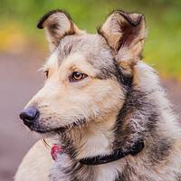 Alfi, pies do adopcji, Poznań, Dopiewo