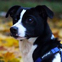Hepi, pies do adopcji, Poznań