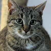 Roszpunka, kotka do adopcji, Poznań, Dopiewo