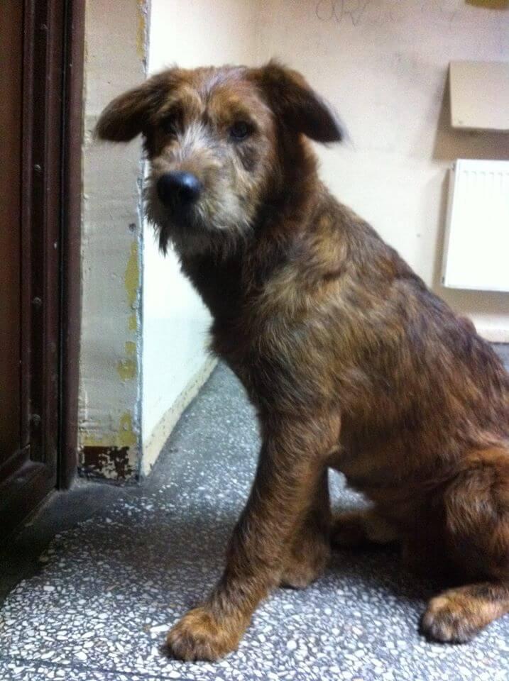 szukamy domy dla sredniej wielkosci psa (2)