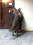 szukamy domy dla sredniej wielkosci psa (3)