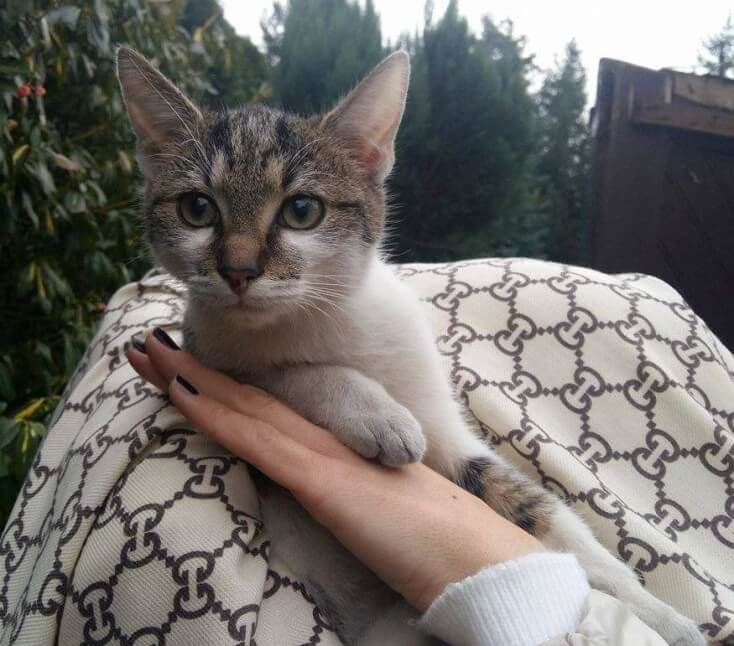 Filon, kot do adopcji, Poznań
