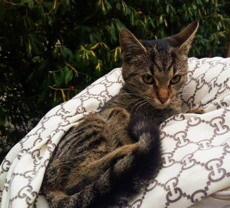 Laura, kotka do adopcji, Poznań