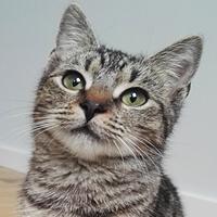 Nutka, kotka do adopcji, Poznań, Dopiewo